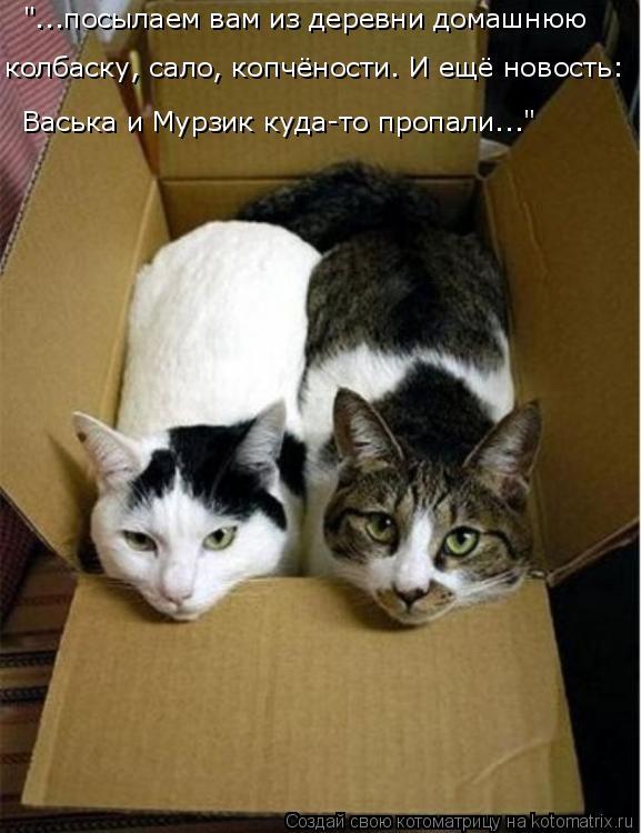 """Котоматрица: """"...посылаем вам из деревни домашнюю колбаску, сало, копчёности. И ещё новость: Васька и Мурзик куда-то пропали..."""""""