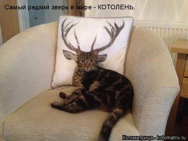 Котоматрица: Самый редкий зверь в мире - КОТОЛЕНЬ.