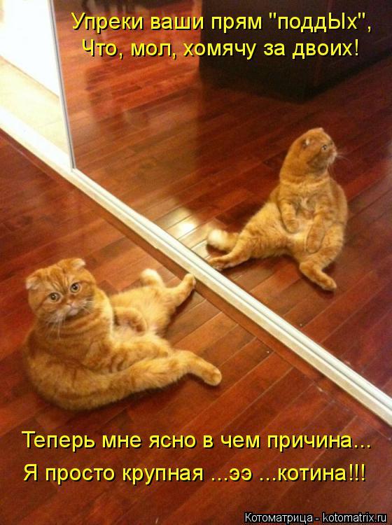 """Котоматрица: Теперь мне ясно в чем причина... Что, мол, хомячу за двоих! Упреки ваши прям """"поддЫх"""", Я просто крупная ...ээ ...котина!!!"""