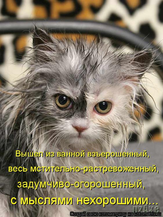 Котоматрица: Вышел из ванной взъерошенный, весь мстительно-растревоженный, с мыслями нехорошими... задумчиво-огорошенный,
