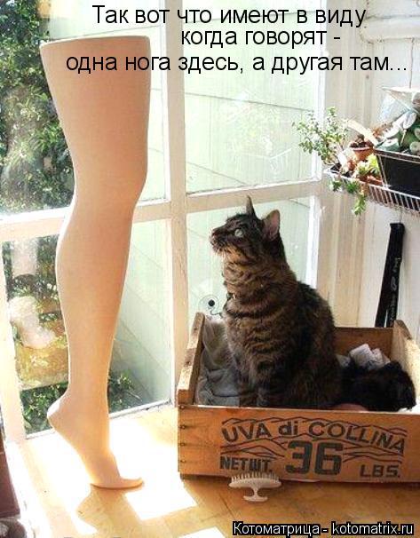Котоматрица: Так вот что имеют в виду когда говорят - одна нога здесь, а другая там...