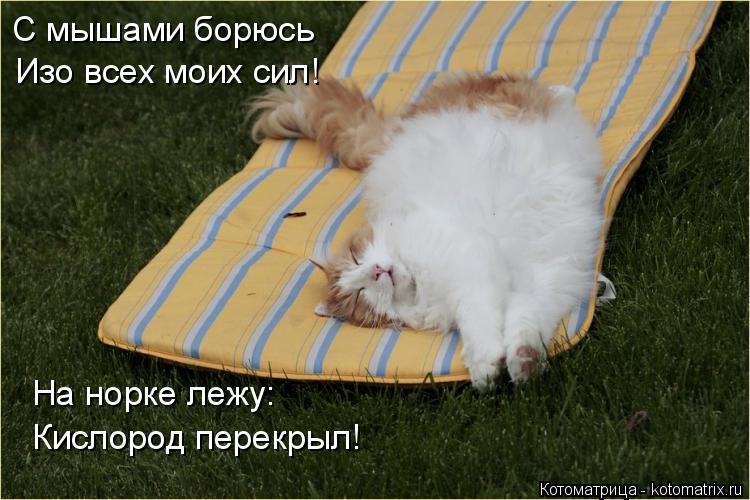 Котоматрица: Изо всех моих сил! С мышами борюсь На норке лежу: Кислород перекрыл!