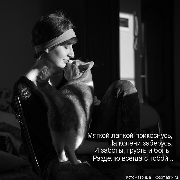 Котоматрица: Мягкой лапкой прикоснусь, На колени заберусь, И заботы, грусть и боль Разделю всегда с тобой...