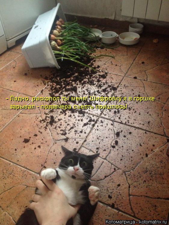 Котоматрица: зарывал - позавчера съесть пришлось!  - Ладно, расколол ты меня! Шифровку я в горшке