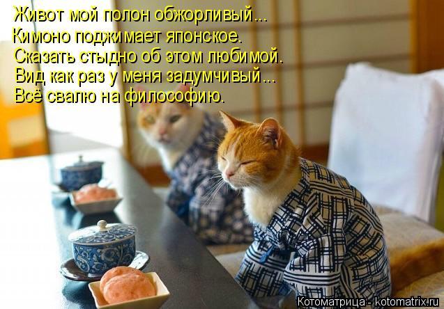 Котоматрица: Живот мой полон обжорливый... Кимоно поджимает японское. Сказать стыдно об этом любимой. Всё свалю на философию. Вид как раз у меня задумчивы