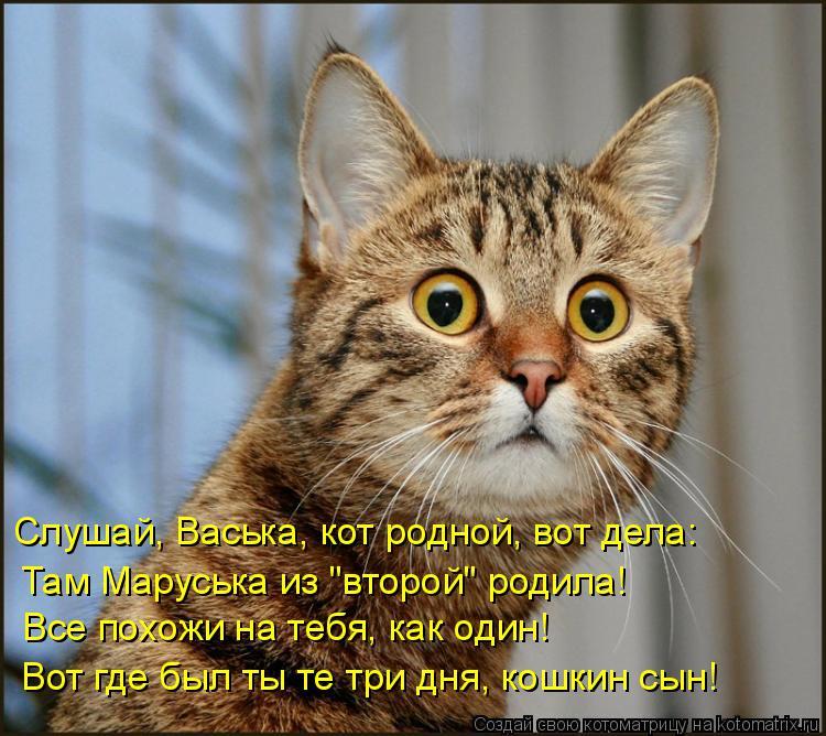 """Котоматрица: Слушай, Васька, кот родной, вот дела: Там Маруська из """"второй"""" родила! Все похожи на тебя, как один! Вот где был ты те три дня, кошкин сын!"""