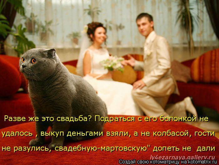 """Котоматрица: Разве же это свадьба? Подраться с его болонкой не  удалось , выкуп деньгами взяли, а не колбасой, гости  не разулись,""""свадебную-мартовскую"""" до"""