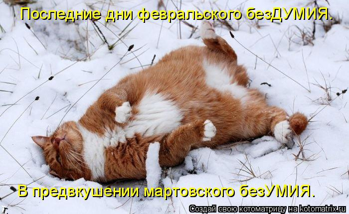 Котоматрица: Последние дни февральского безДУМИЯ. В предвкушении мартовского безУМИЯ.