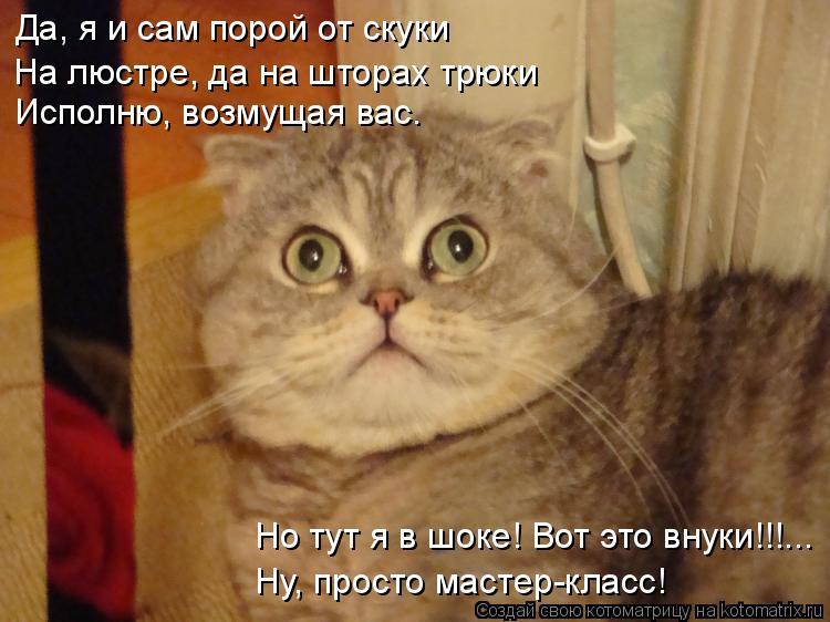 Котоматрица: Да, я и сам порой от скуки На люстре, да на шторах трюки Исполню, возмущая вас. Но тут я в шоке! Вот это внуки!!!...  Ну, просто мастер-класс!