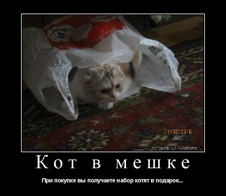 Котоматрица: Кот в мешке При покупке вы получаете набор котят в подарок...