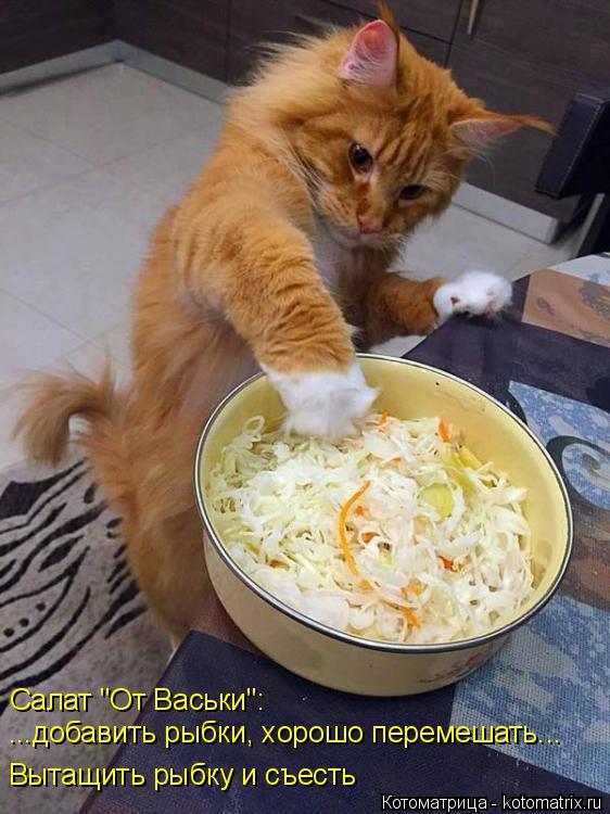 """Котоматрица: Салат """"От Васьки"""":  ...добавить рыбки, хорошо перемешать... Вытащить рыбку и съесть"""
