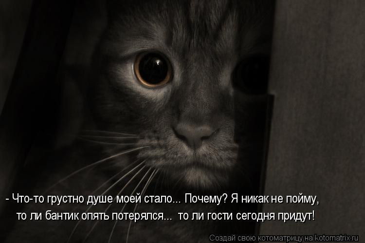 Котоматрица: - Что-то грустно душе моей стало... Почему? Я никак не пойму, то ли бантик опять потерялся...  то ли гости сегодня придут!