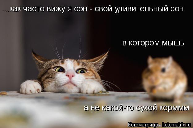 Котоматрица: ...как часто вижу я сон - свой удивительный сон  в котором мышь а не какой-то сухой корммм