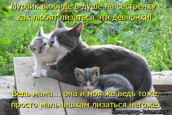 Котоматрица: как любят лизаться эти девчонки! Ведь мама... она и моя же ведь тоже, просто мальчишкам лизаться негоже. Мурзик в обиде в душе на сестренку -