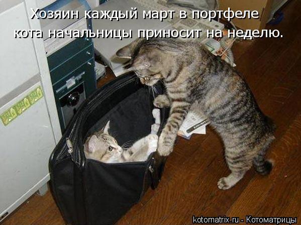Котоматрица: Хозяин каждый март в портфеле кота начальницы приносит на неделю.
