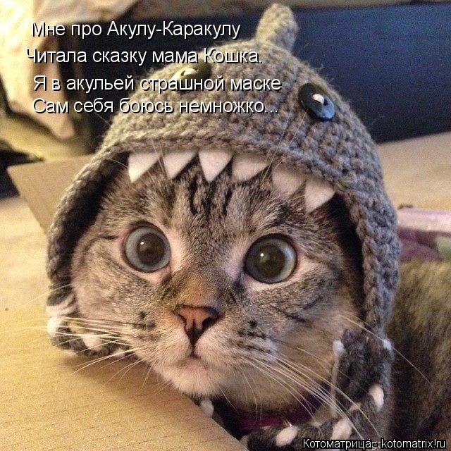 Котоматрица: Мне про Акулу-Каракулу Читала сказку мама Кошка. Я в акульей страшной маске Сам себя боюсь немножко...