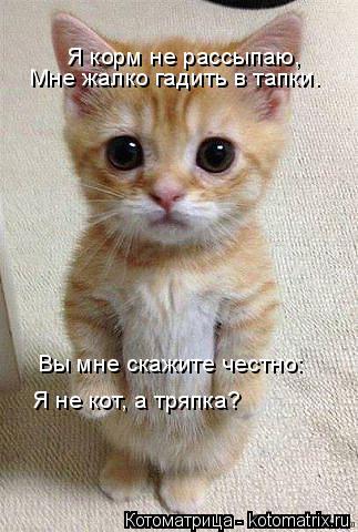 Котоматрица: Я корм не рассыпаю, Мне жалко гадить в тапки. Вы мне скажите честно: Я не кот, а тряпка?