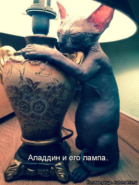 Котоматрица: Аладдин и его лампа.