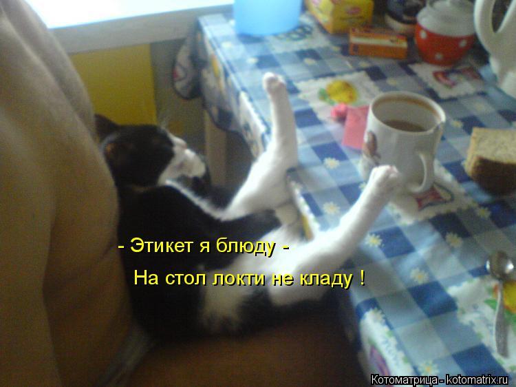 Котоматрица: - Этикет я блюду -  На стол локти не кладу !