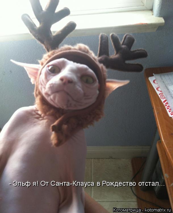 Котоматрица: - Эльф я! От Санта-Клауса в Рождество отстал...