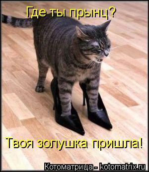 Котоматрица: Где ты прынц? Твоя золушка пришла!