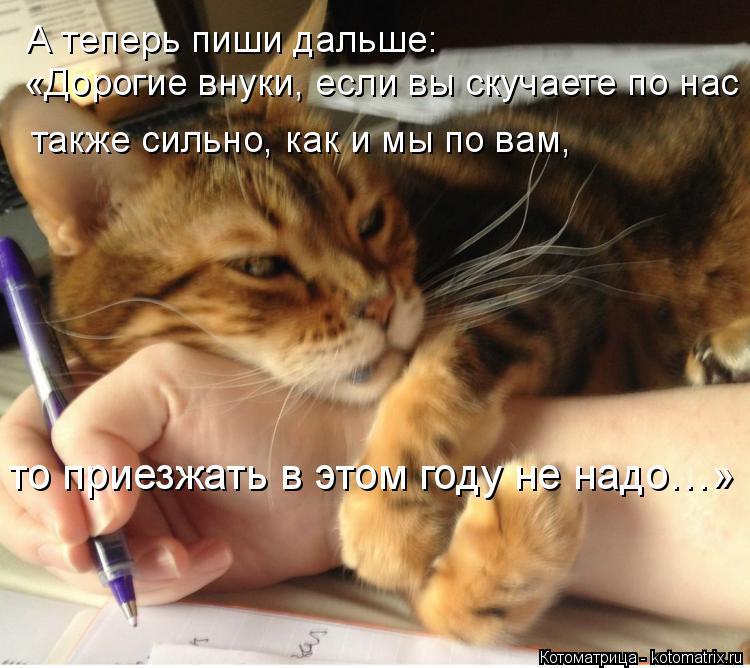 Котоматрица: А теперь пиши дальше: «Дорогие внуки, если вы скучаете по нас также сильно, как и мы по вам, то приезжать в этом году не надо…»