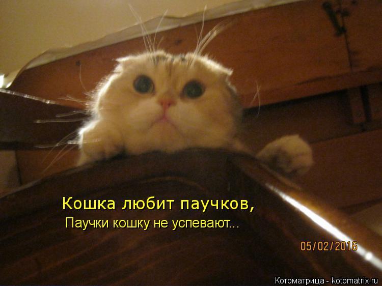 Котоматрица: Кошка любит паучков, Паучки кошку не успевают...