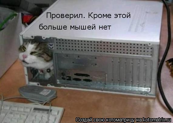 Котоматрица: Проверил. Кроме этой   больше мышей нет