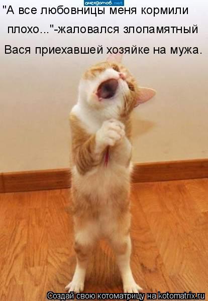 """Котоматрица: """"А все любовницы меня кормили  плохо...""""-жаловался злопамятный  Вася приехавшей хозяйке на мужа."""