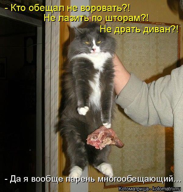 Котоматрица: - Кто обещал не воровать?! Не лазить по шторам?! Не драть диван?! - Да я вообще парень многообещающий...