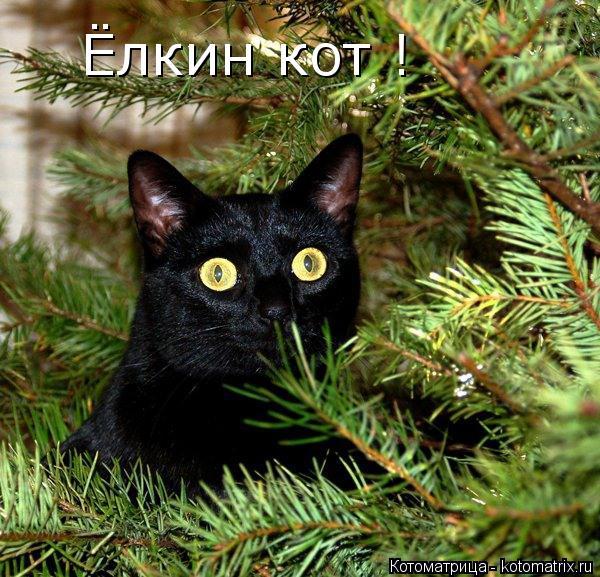 Котоматрица: Ёлкин кот !