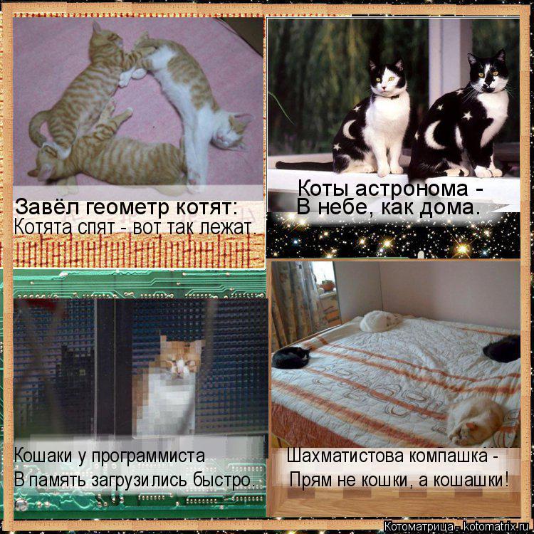 Котоматрица: Кошаки у программиста                 Шахматистова компашка - В память загрузились быстро.       Прям не кошки, а кошашки! Завёл геометр котят:         В