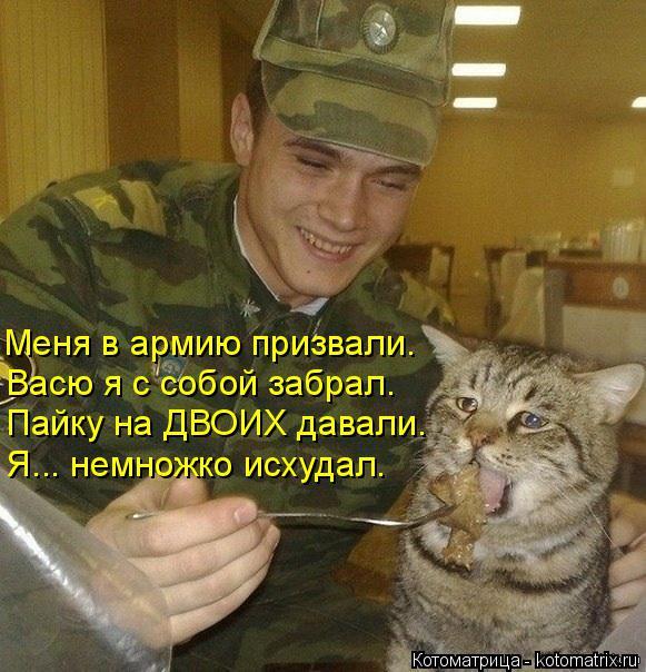 Котоматрица: Пайку на ДВОИХ давали. Васю я с собой забрал. Меня в армию призвали. Я... немножко исхудал.