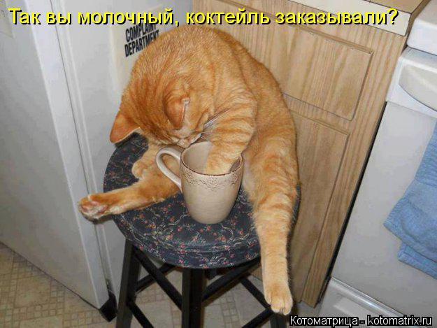 Котоматрица: Так вы молочный, коктейль заказывали?