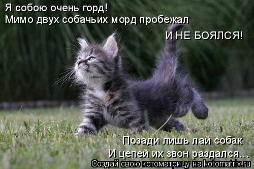 Котоматрица: Я собою очень горд!  Мимо двух собачьих морд пробежал И НЕ БОЯЛСЯ!  Позади лишь лай собак И цепей их звон раздался…