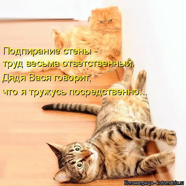 Котоматрица: Подпирание стены - труд весьма ответственный. Дядя Вася говорит, что я тружусь посредственно...