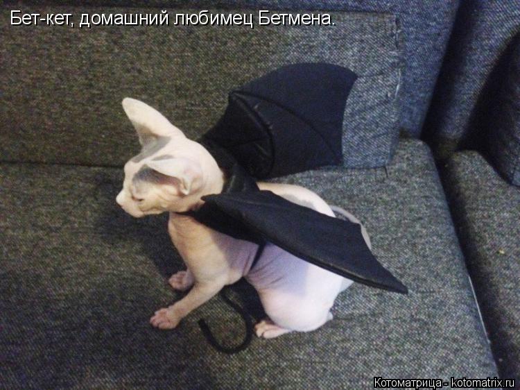 Котоматрица: Бет-кет, домашний любимец Бетмена.