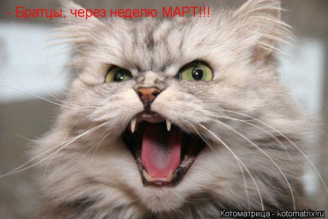 Котоматрица: - Братцы, через неделю МАРТ!!!