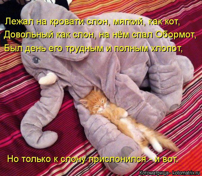 Котоматрица: Лежал на кровати слон, мягкий, как кот, Довольный как слон, на нём спал Обормот, Был день его трудным и полным хлопот, Но только к слону присло