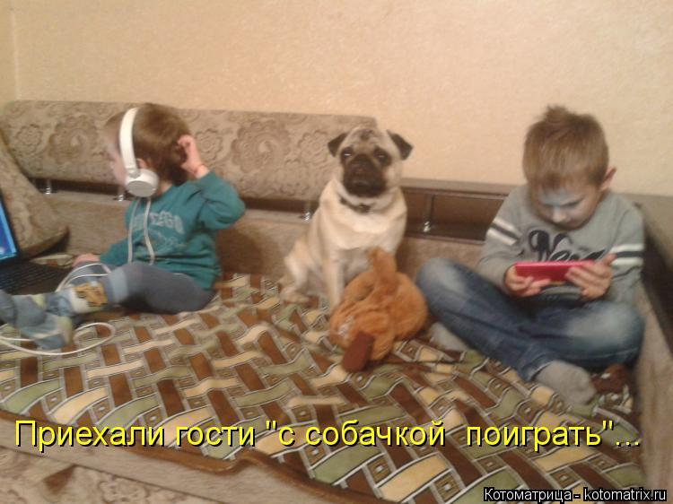 """Котоматрица: Приехали гости """"с собачкой  поиграть""""..."""