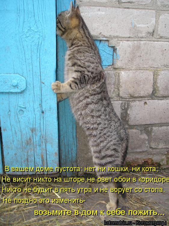 Котоматрица: В вашем доме пустота: нет ни кошки, ни кота, Не висит никто на шторе,не рвет обои в коридоре, Никто не будит в пять утра и не ворует со стола. Не