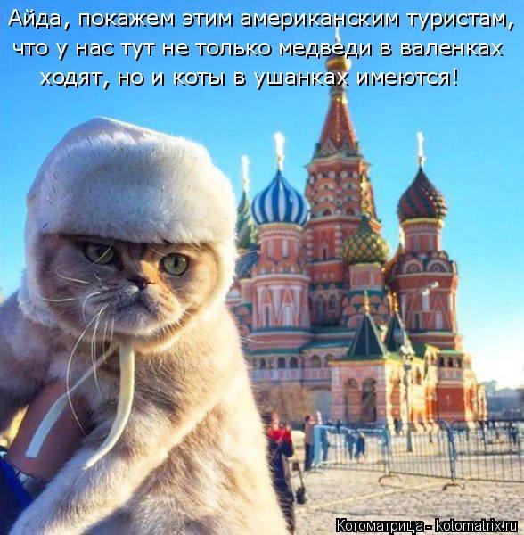 Котоматрица: Айда, покажем этим американским туристам, что у нас тут не только медведи в валенках ходят, но и коты в ушанках имеются!