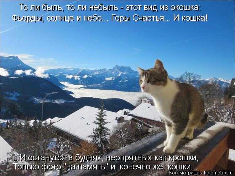 Котоматрица: То ли быль, то ли небыль - этот вид из окошка: Фьорды, солнце и небо... Горы Счастья... И кошка! ...И останутся в буднях, неопрятных как крошки, Тол
