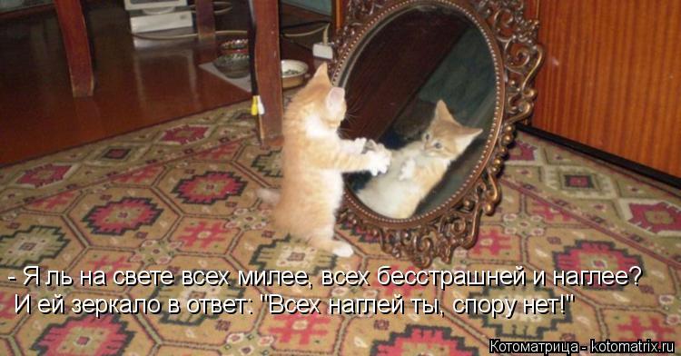"""Котоматрица: - Я ль на свете всех милее, всех бесстрашней и наглее? И ей зеркало в ответ: """"Всех наглей ты, спору нет!"""""""
