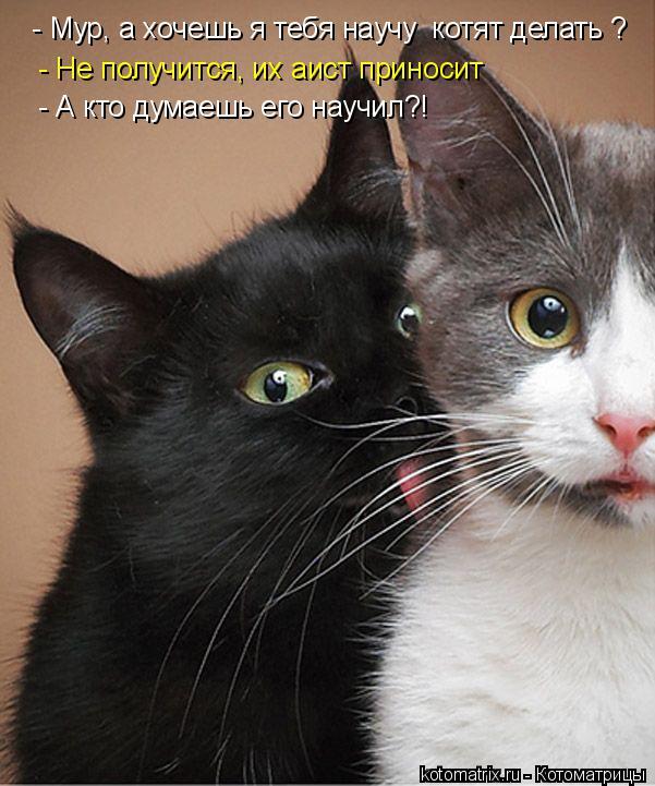 Котоматрица: - Мур, а хочешь я тебя научу  котят делать ? - Не получится, их аист приносит - А кто думаешь его научил?!