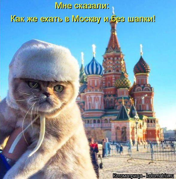 Котоматрица: Мне сказали: Как же ехать в Москву и без шапки!