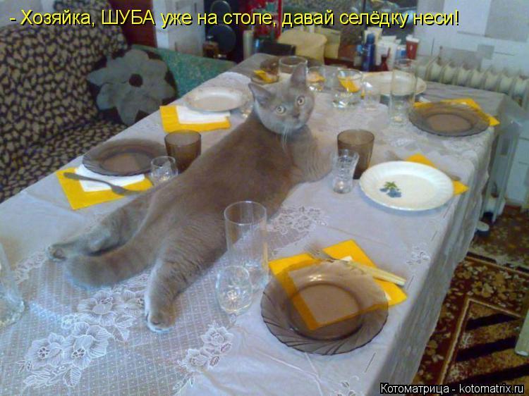 Котоматрица: - Хозяйка, ШУБА уже на столе, давай селёдку неси!