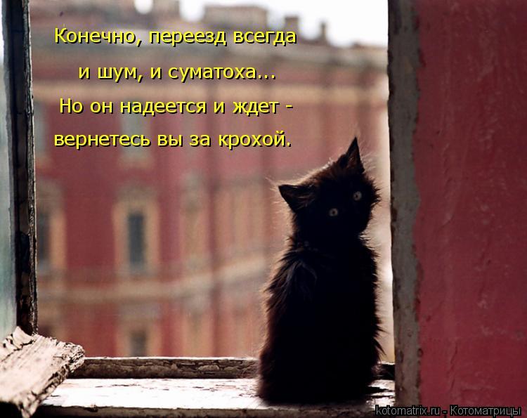 Котоматрица: и шум, и суматоха... вернетесь вы за крохой. Конечно, переезд всегда  Но он надеется и ждет -