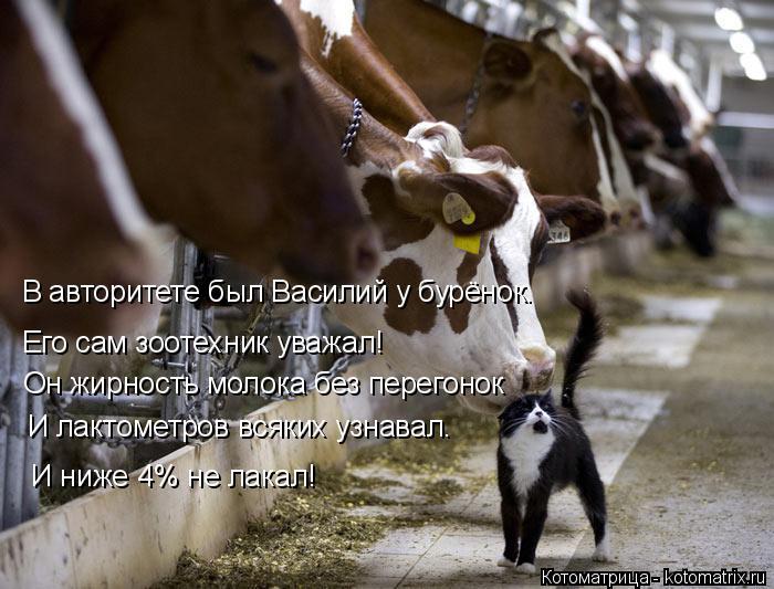 Котоматрица: В авторитете был Василий у бурёнок. Его сам зоотехник уважал! Он жирность молока без перегонок  И ниже 4% не лакал! И лактометров всяких узнав