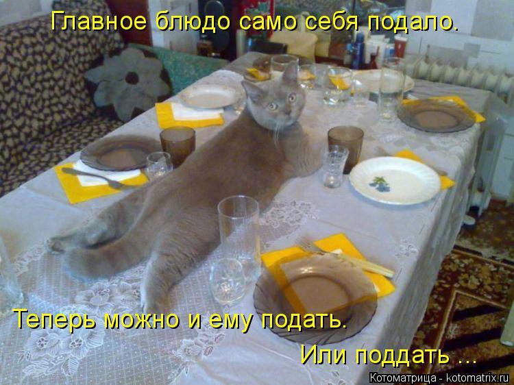 Котоматрица: Главное блюдо само себя подало. Теперь можно и ему подать. Или поддать ...